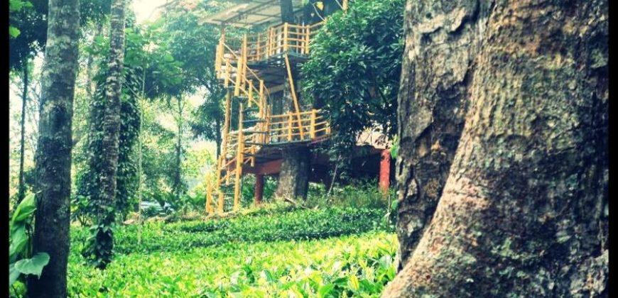 Jungle Jive